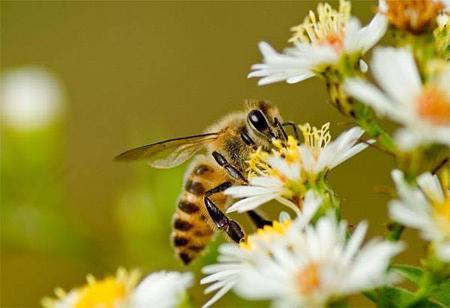 蜂蜜 非加熱 生 通販