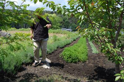 無農薬栽培ハーブ園